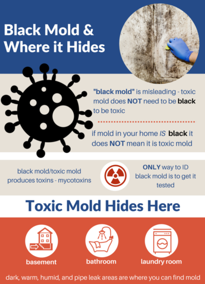 /mold